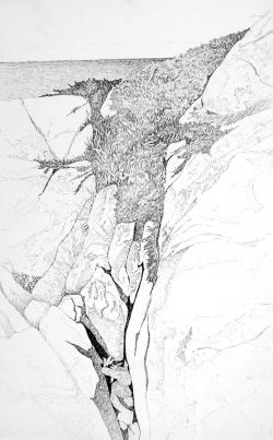 Monhegan Crevice and Yew