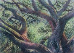 Mighty Oak, Woodacre