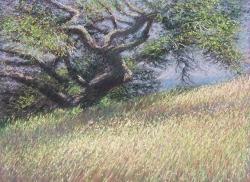 Blueberry Oak and Grass