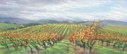 Kline Vineyards
