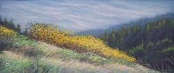 October Willows