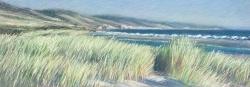 Dunes at Limantour Beach